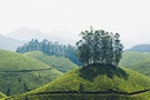 Kerala - High Hills & Soothing Backwaters