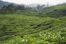 Scenic Munnar & Beautiful Backwaters-Deluxe