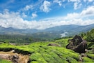 Scenic Munnar to Wildlife at Thekkady