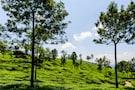 Kerala & Tamil Nadu: Natural & Cultural Riches -standard