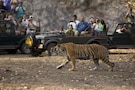 Ranthambhore - Weekend Gateway