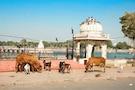 Auspicious Gujarat