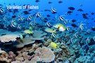 Andaman Summer Special With Under Water Safari