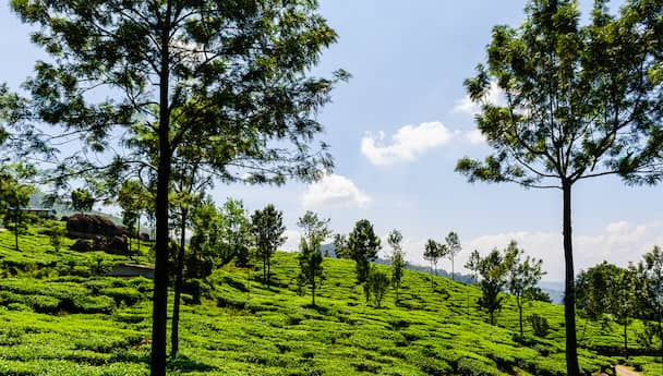 Holiday in the Hills (Munnar & Ooty)