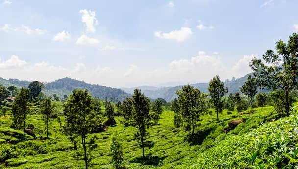 Glimpse Of Kerala!