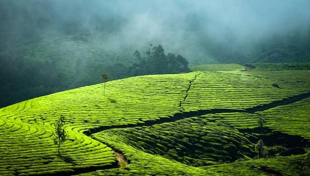 Revel In The Beauty Of Kerala!