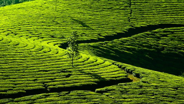 Breathtaking Kerala Natural Wonders