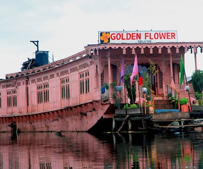 Pink Golden Flower,Srinagar