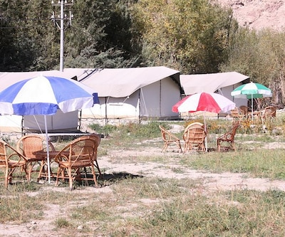 Desert Oasis Camp, --None--,