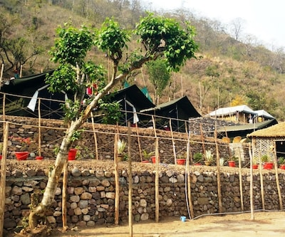 Cradle Of Life Camp,Rishikesh