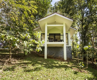 Contemporary abode tucked away in greenery,Wayanad