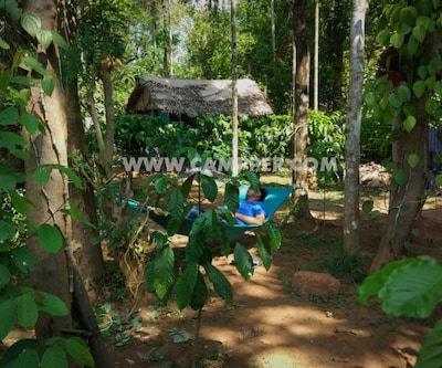 Campper Tea Plantation Camp At Wayanad,Wayanad