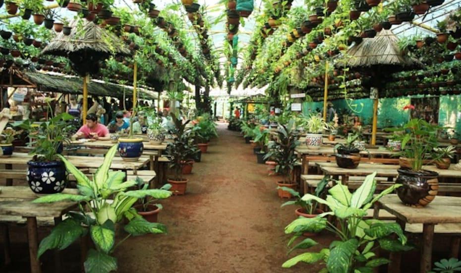 Jungle Nature Resorts, none,