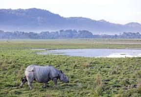 Wildlife Tour at Kaziranga National Park