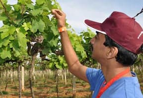 Mysore Wine Tour
