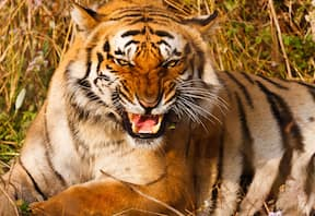 Wildlife safari at Tiger Camp in Corbett National Park