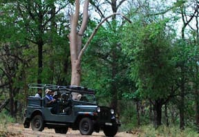 Alluring wildlife at K Gudi Wilderness Camp, BRT Hills