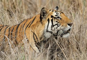 Wildlife Safari at Infinity Bandhavgarh Wilderness
