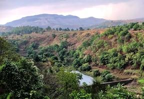 Kurungwadi Fireflies