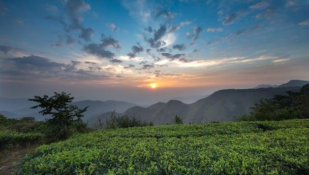 Wow Kerala