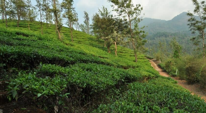 Tea Garden Resorts, Vythiri, Tea Garden Resorts
