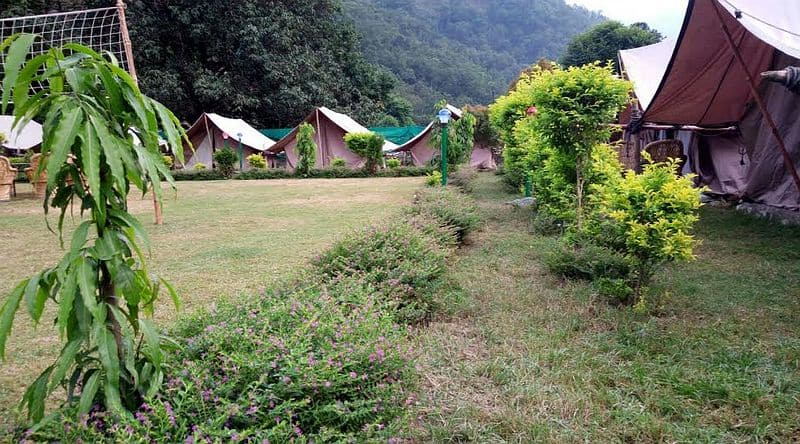 Camp Wildlife, Badrinath Road, Camp Wildlife