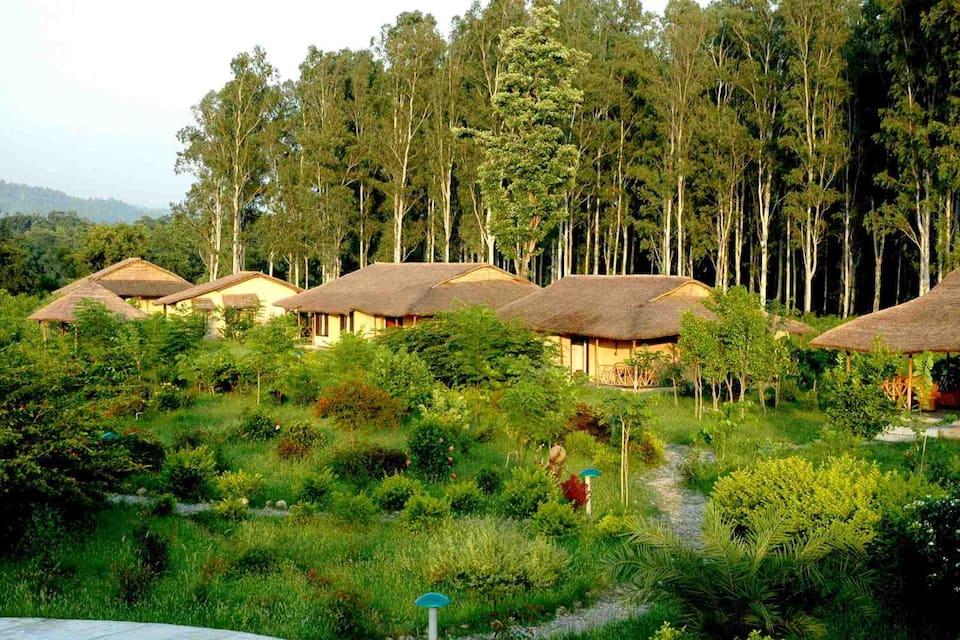 Jim's Jungle Retreat, Dhela, Jim's Jungle Retreat