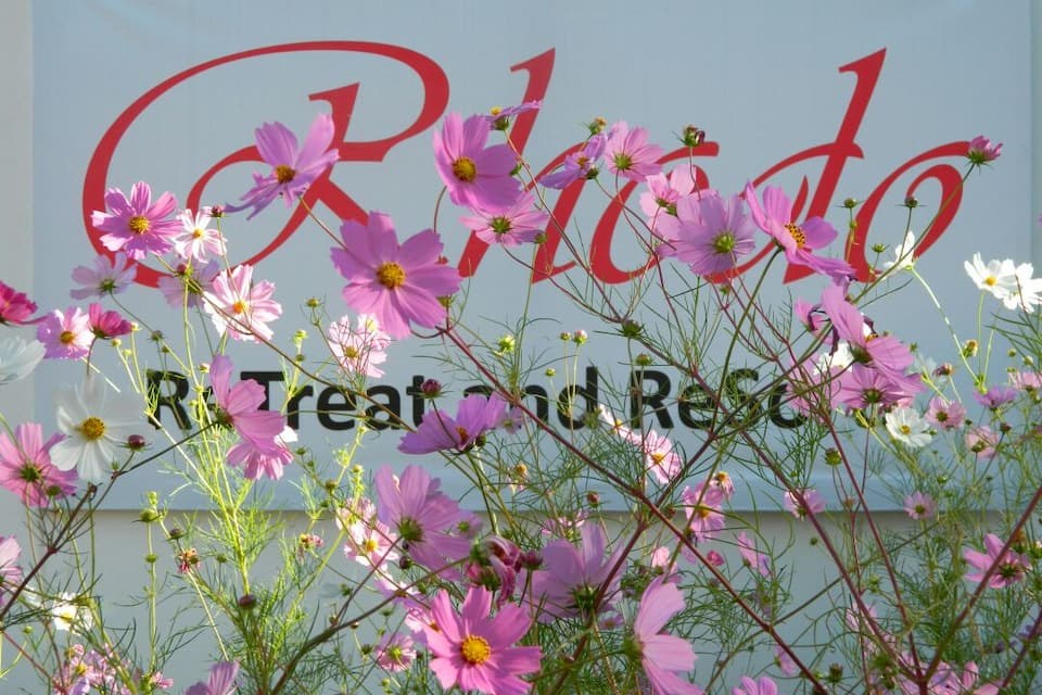 Rhodo Retreat And Resorts, Majkhali, Rhodo Retreat And Resorts