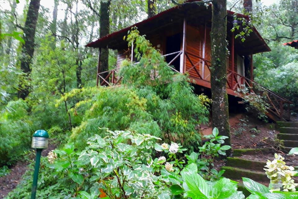 Ayar Jungle Camp, Mallital, Ayar Jungle Camp