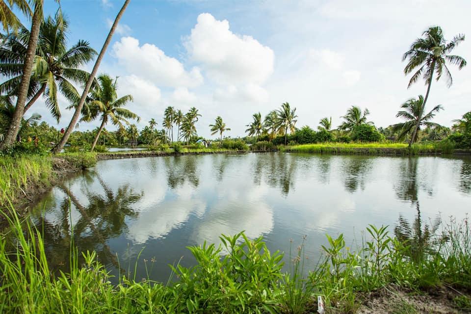 Kayal Island Retreat, Eramalloor, Kayal Island Retreat
