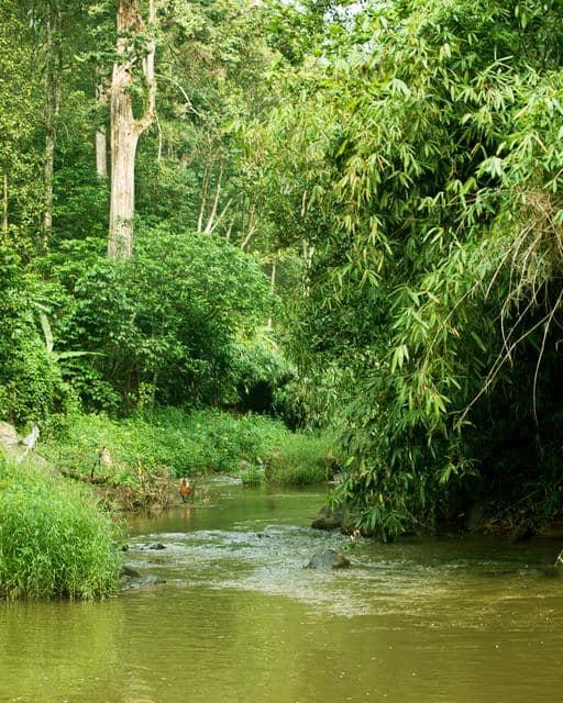 Forest Haven Resort, Kallar, Forest Haven Resort