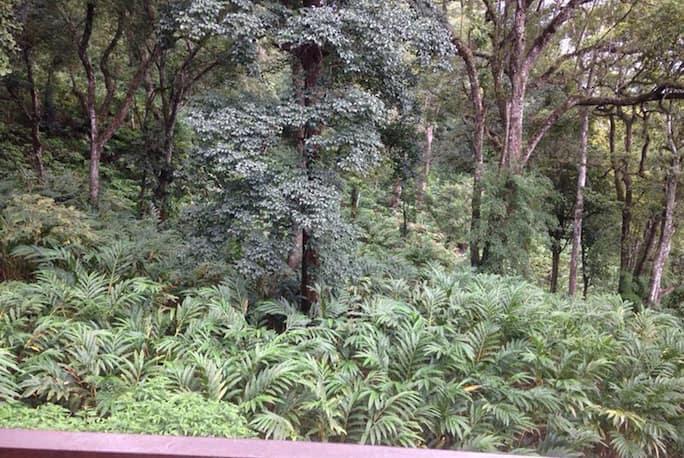 Spice Jungle Resort in Munnar - Book Room 1300/night