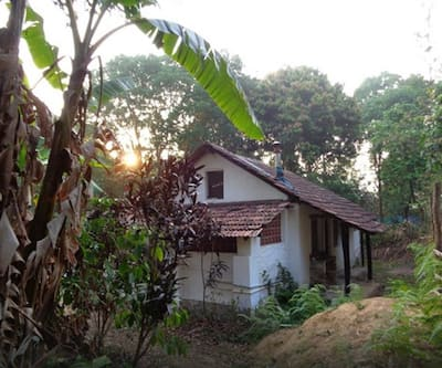 Rain Forest Retreat,Coorg
