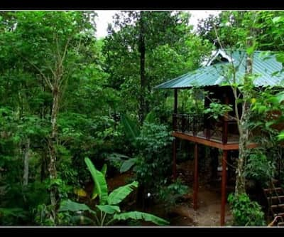 Monsoon Retreats,Thekkady