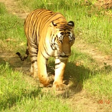 Windsor Tiger Resort, Kanha
