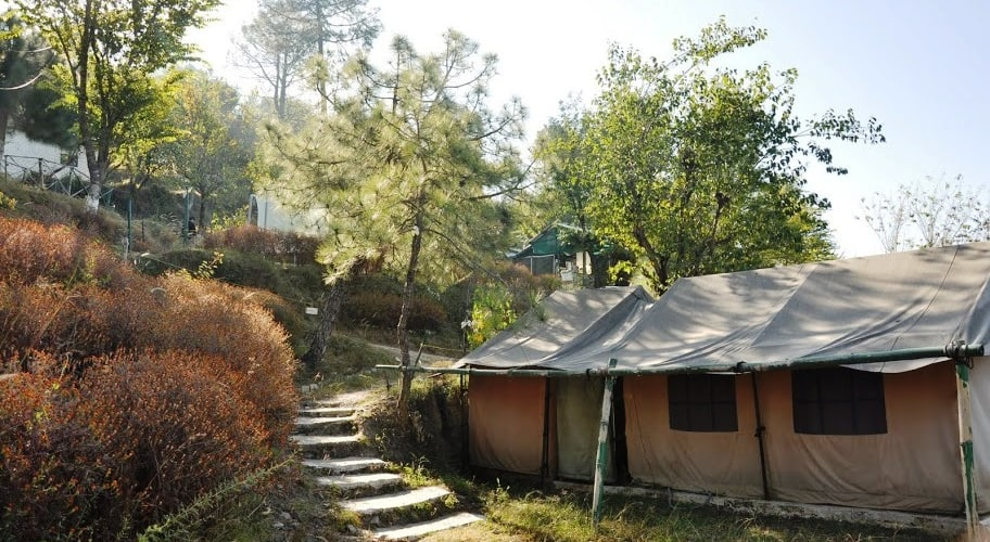 Camp Chrysalid Dharamshala, none,