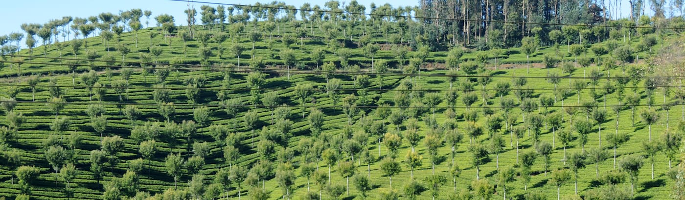 Ooty Holiday Packages
