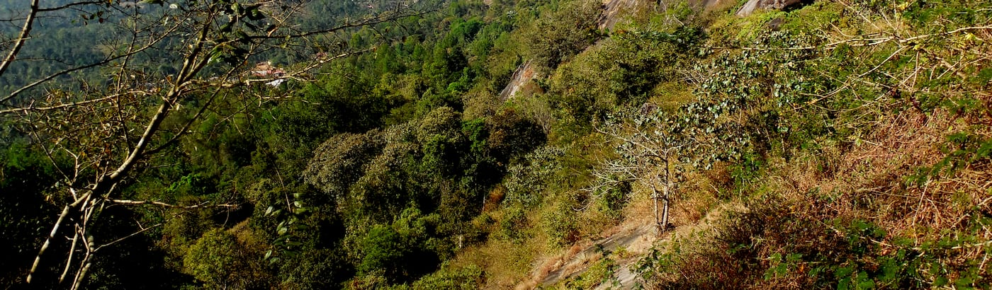 Wayanad Holiday Packages