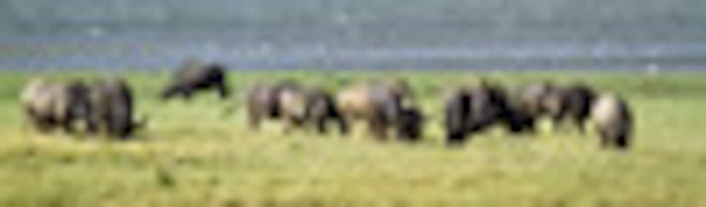 Kaziranga Holiday Packages