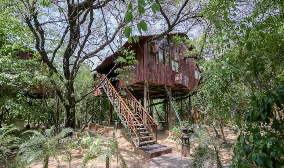 Tree House Jaipur For The Tree House Resort Jaipur Hotel Booking Reviews Room Photos Price Offers Photos