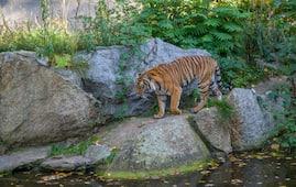 Corbett Tiger Reserve