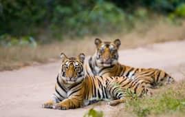 Rampara Wildlife Sanctuary