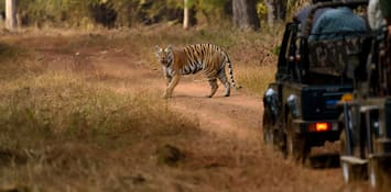 5 Best National Parks In Madhya Pradesh - For Wildlife Enthusiasts