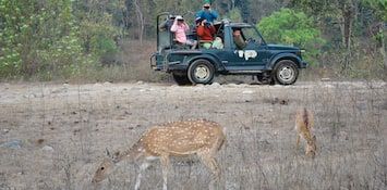 Tagging An Infant Along For A Safari In Jim Corbett