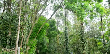 5 Parks In And Around Yercaud