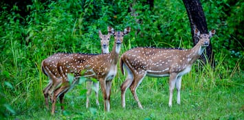 Wildlife And Bird Sanctuaries In Mangalore You Should Explore