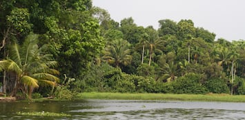 5 Best Things To Do In God's Own Country - Kerala