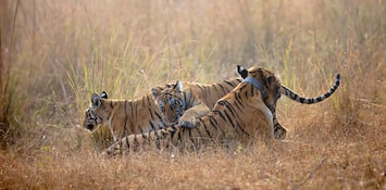 Wildlife Safari On Mind? Visit Nagpur: The Gateway To India's Popular Tiger Reserves!