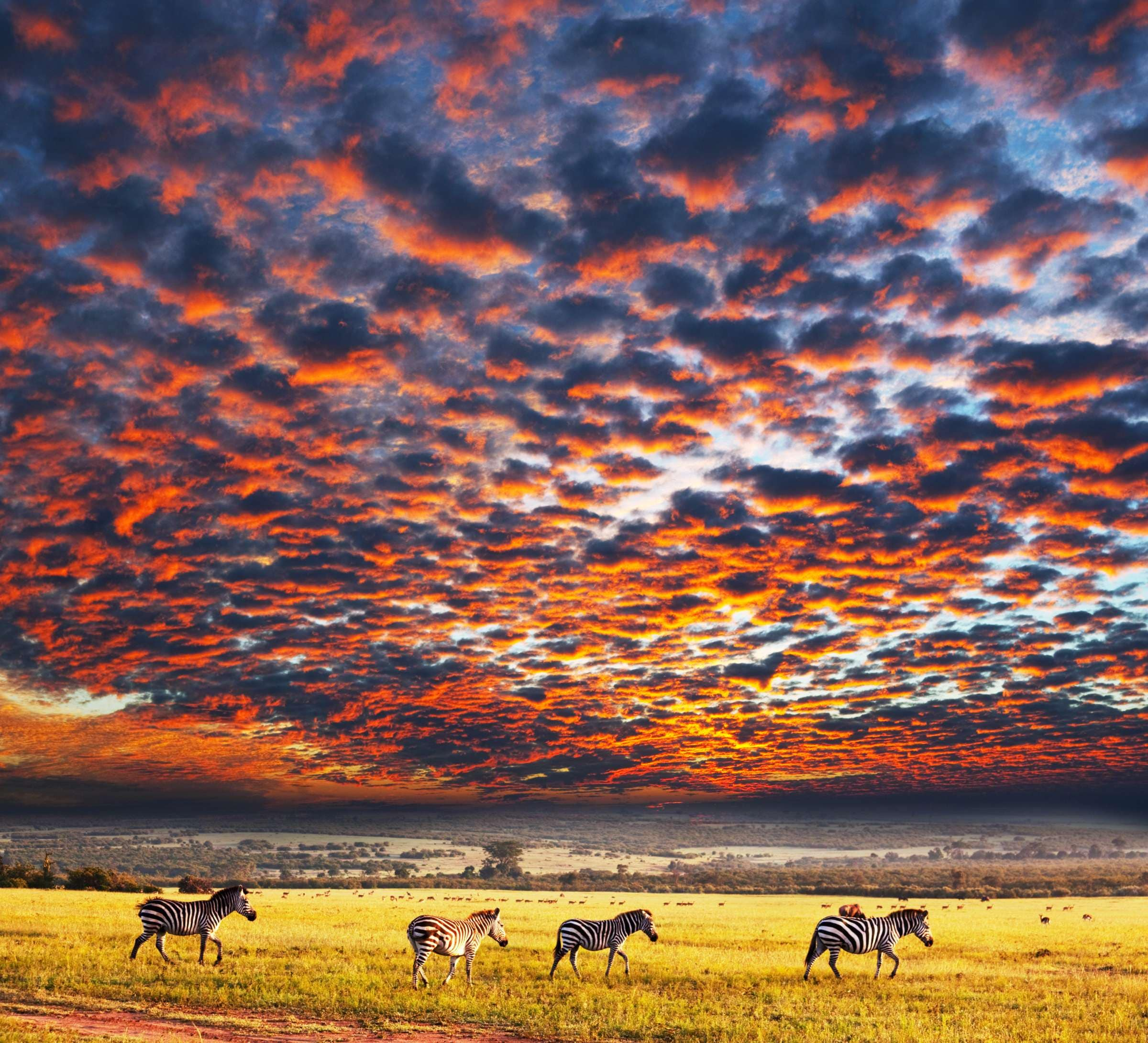Serengeti National Park >> Destination Guide To Serengeti National Park Adventurenation Com