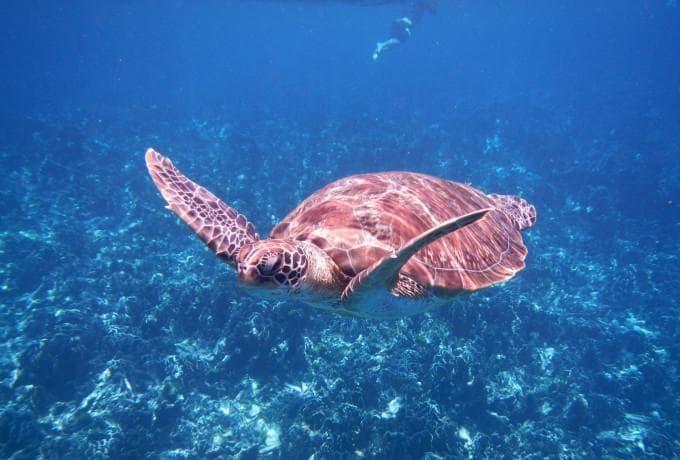 Similan Islands Day Tour from Phuket
